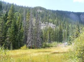 The meadow where the old lumber mill once sat; the gray pile to the right is not rock but rather old rotting lumber