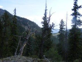 Looking back downstream, to the southeast, in Comanche Gulch