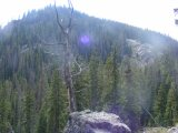Forested slope above Comanche Gulch, leading up to Point 11993
