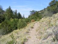 The Major Creek Trail No. 963, in the transition from Pinyon-Juniper to montane