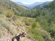 Leah and Draco pausing on the Major Creek Trail No. 963, the crest of the Sangre de Cristo Range clearly visible