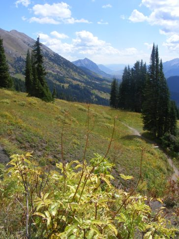 Just above the Washington Gulch Trail No. 403, looking south; Mount Crested Butte visible in the center