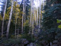 Mixed aspen-conifer forest on Cataract Gulch