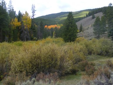 Flaming aspen tops on Lake Branch