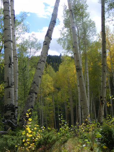 Looking out from an aspen grove on Lake Branch