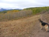 Leah staring off into a meadow on the Swampy Trail No. 439, Gunnison National Forest