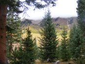 Looking out from the forest towards the Anthracite Range