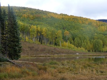 The Beaver Ponds under a changing aspen forest