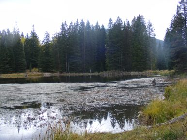 The Beaver Ponds, still