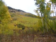 The aspen forest above the Beaver Ponds