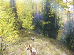 Draco and Leah following the user-created trail that follows the outlet of the Beaver Ponds