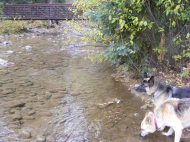 Draco and Leah hydrating on Cottonwood Creek