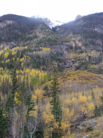 Aspen in Autumn glory, looking up at Points 13299 and 13674