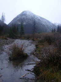 Cottonwood Creek flowing below its forks