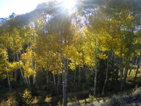 Sunlight streaming through colorful aspen on BLM Road 3018