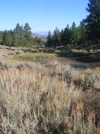 A stock pond along BLM Road 3018