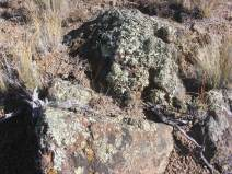 Lichen covered igneous rock