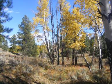 Pretty aspen grove near BLM Road 3018
