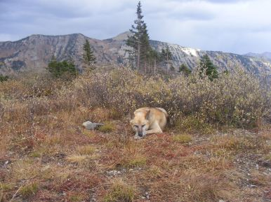 Draco taking a very scenic nap at Blue Lake, Ruby Range behind