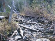 The waters of Peeler Basin flowing down through a thick forest