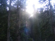 Sunlight through the forest in Redwell Basin