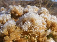Ice crystals on vegetation