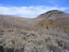On Steers Gulch, the lower limit of aspen growth