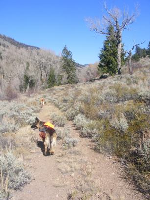 Leah and Draco on the West Beaver Creek Trail No. 447, in the West Elk Mountains of Colorado