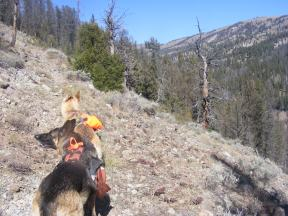 Leah and Draco on the West Beaver Creek Trail No. 447 where it rises above the creek, south of April Gulch