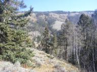 A view of Beaver Creek