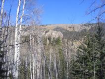 Denuded aspen, exposed bluffs near April Gulch