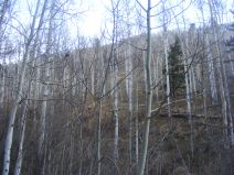 The aspen forest about Lion Gulch