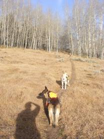 "A ""selfie"", of sorts, with Leah and Draco on the Lion Gulch Trail No. 536 in Elk Park"