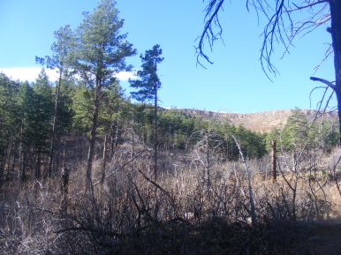 Extant forest amid the burnt remainder, Mason Gulch