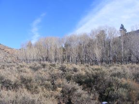 Aspen and sagebrush steppe on Camp Creek