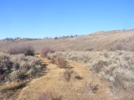 Steppe and grassland on Camp Creek
