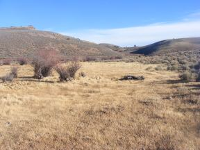 Willow and grass surrounded by sagebrush steppe on Willow Creek