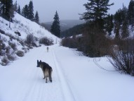 Leah and Draco traversing the snowmobile tracks on Gunnison National Forest Road 780