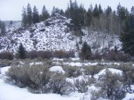 Typical setting for Long Branch - aspen and conifer sharing space with the sagebrush