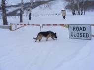 Leah clearly ignoring the posted closure on Carbon Creek!