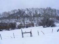 Carbon Peak behind a grove of aspen
