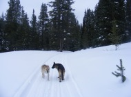 Draco and Leah on Road 737