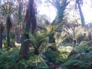 Lush vegetation in Golden Gate Park