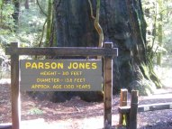 The Parson Jones redwood in Armstrong Redwoods State Natural Reserve