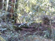 Redwood forest understory on the banks of Fife Creek in Armstrong Redwoods State Natural Reserve