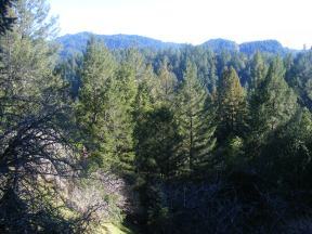 Looking out over Fife Creek from the Pool Ridge Trail in Armstrong Redwoods State Natural Reserve