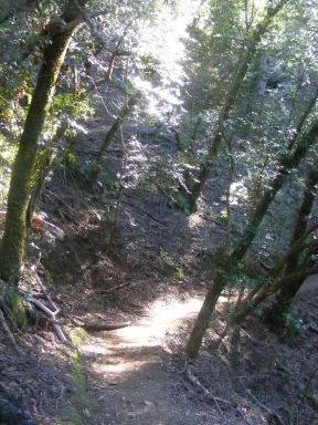 Hiking on the Pool Ridge Trail in Armstrong Redwoods State Natural Reserve
