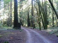 A part of the Pool Ridge Trail near the Colonel Armstrong Tree in Armstrong Redwoods State Natural Reserve