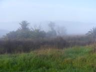 Foggy day in Radke Martinez Regional Shoreline Park