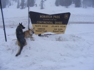 Leah and Draco posing on Monarch Pass on what proved to be a blustery day